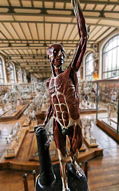 Anatomie impertinente