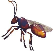 Insecte FDS 2021